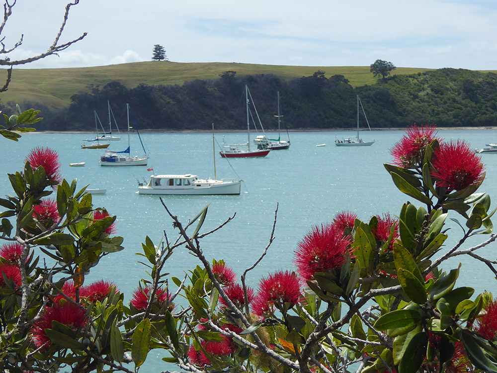 Pohutukawa Flowers looking out to Islington Bay - Photo by Art Polkanov